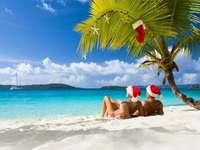 Vacaciones bajo palmeras - plaża, palma, woda, gwiazdki, czapki
