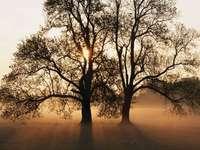 copac de toamnă