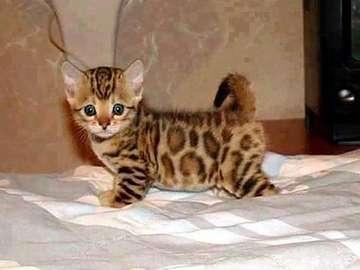ki = otek a kitty - jakie maleństwo z tego kotka