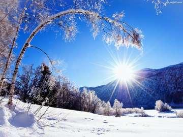 зимен изглед - зима, сняг, слънце, гора, дървета