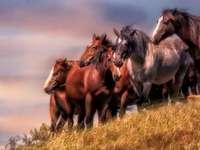 κάστανα άλογα