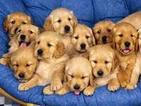 câini frumoși
