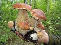 pădure - ciuperci