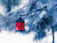 luz para ceiu - śnieg, latarnia, zima, drzewo