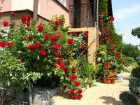 Fleurs  - Świat byłby piękniejszy jakby kałdy dom miał takie otoczenie