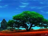 bardzo duże drzewo