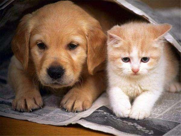 dois filhos - dois pequenos skiffs: um gato e um cachorro (10×10)