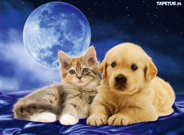 gatos perros - Como un perro con un gato. Puzzle bardzo łatwe bardzo (17×13)