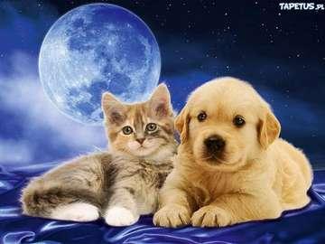 koty psy - puzzle bardzo łatwe bardzo