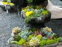 bloemen samenstelling - Bloemen samenstelling. Verschillende soorten bloemen in potten. Rotstuin met bloemen erin.