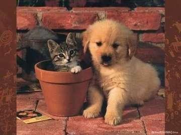 Małe zwierzątka - Małe śliczne zwierzątka