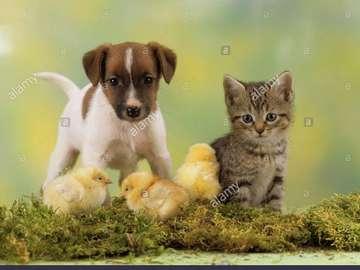 baby animals - Małe zwierzątka - puzzle