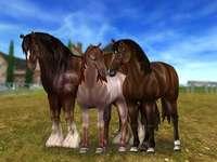 3 Cavalos do Star Stable Online