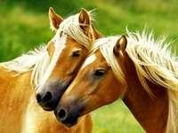 deux soeurs poneys - Deux chevaux. Bardzo fajne koniki puzzle nauczające dzieci nauki poleca monika G. kl 3 polecam. Br�