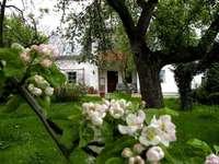 dom w wiśniowym sadzie - dom w wiśniowym sadzie