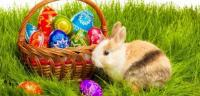 basket and Easter eggs - the bunny sits next to the basket