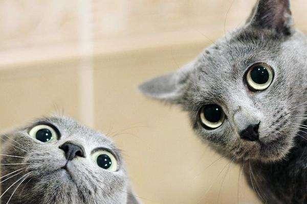 Dwa szare koty - układanka stworzona z szarych kotów (2×3)