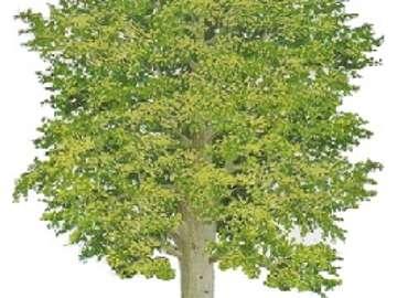 uma árvore para crianças - jogo de árvore de folha caduca para crianças