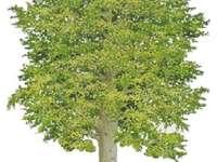 drzewko dle dzieci