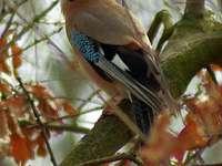 som en fågel - färgglada fjädrar har sittande