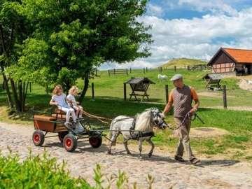 children in a wheelchair, fath - children in a wheelchair, father, pony