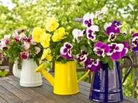 três potes - amores-perfeitos em vasos na mesa