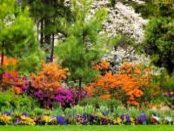 letni  ogród pod lasem - wielobarwny ogród pod lasem
