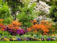 nyári kert az erdő közelében