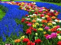 Цветя Цветя