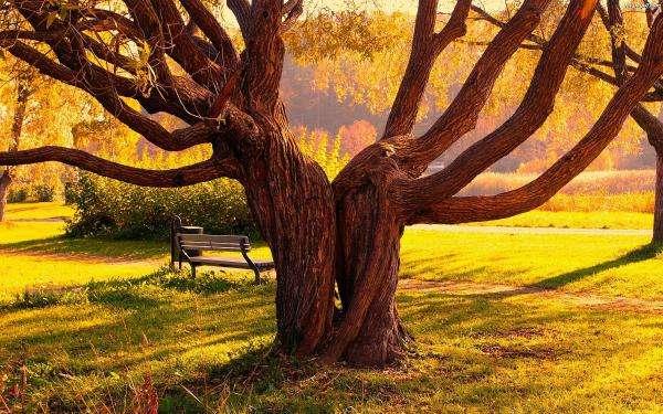 Parc, arbres - Parc, arbres, un banc (10×10)