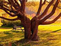 Park,zrośnięte drzewa - Park, zrośnięte drzewa, ławka
