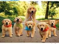 múmia kis kutyákkal