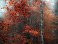 Есенно-червено дърво