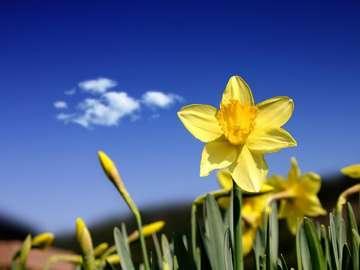 lente prachtig gek - Dit is een foto van de lente lente.