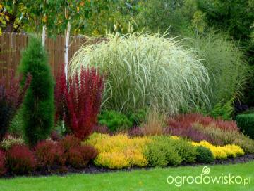 Jardín con pampas y brezos. - Jardin con pampas de pasto y brezo.