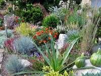 Grassen, struiken in de tuin - Grassen, struiken in de tuin