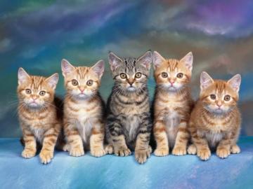 urocze zwierzęta, słodki kotek - pięć razy małe koty - słodki kotek