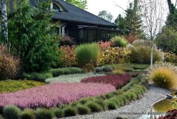 Garden in Witowice - Garden with heathers and pampas grass