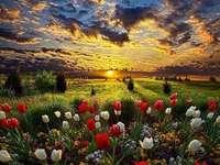 blommor vid solnedgången
