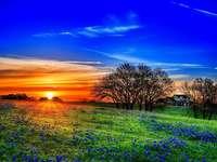 Тексас, ферма, изгрев - Тексас, изгрев над фермата и поляна със сапфири