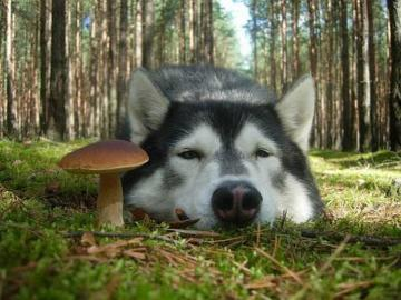 Un cane orgoglioso a guardia d - Un cane orgoglioso a guardia del ritrovamento