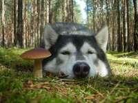 Dumny pies pilnuje znaleziska