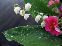 kwiaty- sama natura