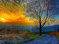 Road, leafless tree, sky online puzzle