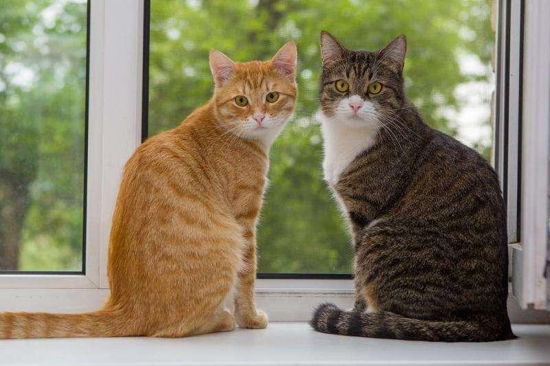 Deuxième chat Deuxième chat - Deuxième chat Deuxième chat Deuxième chat