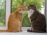 Tweede kat Tweede kat