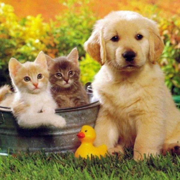 kochane zwierzęta - nie ma to jak w gronie swoich (5×5)