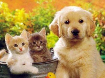 kochane zwierzęta - nie ma to jak w gronie swoich