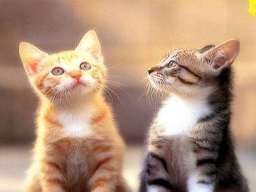 urocze zwierzęta - kici kotki - Patrzę na niego na kogoś, kto mi przypomina, słodki kotek