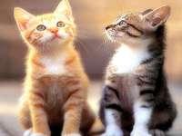 schöne tiere - kitty kats - Ich sehe ihn nach jemandem an, der mich erinnert, süße Kätzchen